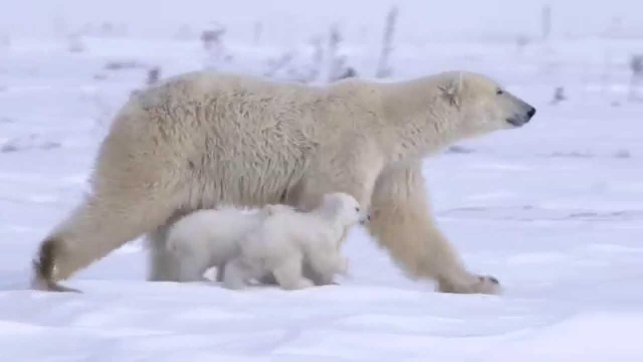 Artigo sobre a diminuição das emissões de CO2 em 2015 e o vídeo Arctic Song
